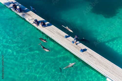 GOLD COAST, AUSTRALIA - JUNE 21, 2015 Dolphin in their enclosure Fototapet