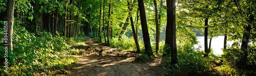 Fototapeta premium szlak w lesie