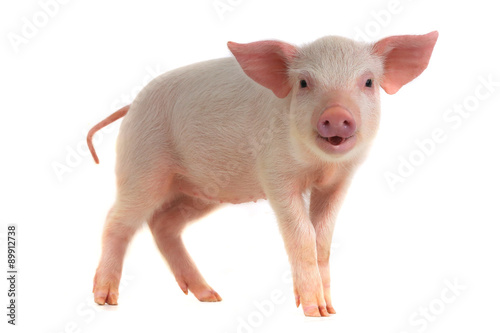 Photo pig