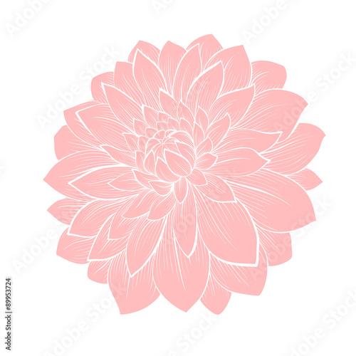 Valokuvatapetti beautiful dahlia flower isolated on white