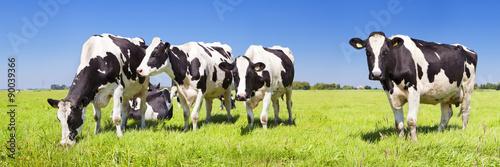 Tableau sur Toile Vaches dans un champ herbeux frais par temps clair