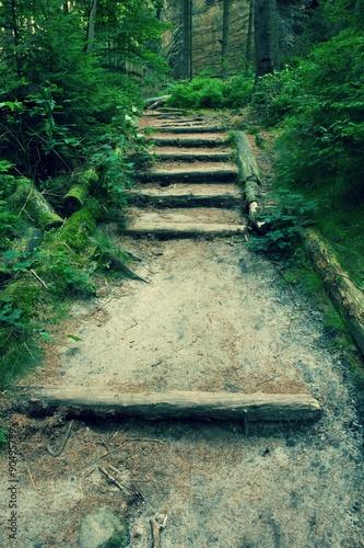 Stare drewniane schody w zarośniętym lesie ogród, ścieżka turystyczna. Schody ze ściętych bukowych pni, świeże zielone gałęzie nad ścieżką