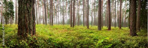Fotografia Lahemaa national park forest panorama