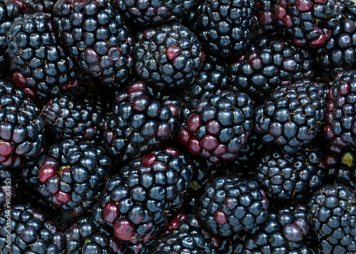 Wallpaper Mural Blackberries background, fresh berries photographed from above