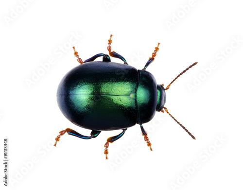 Fotomural Green beetle