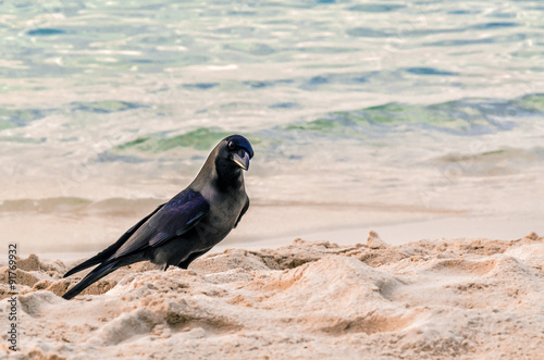 Obraz na płótnie Raven on the ocean. Dweller Fihalhohi Island in the Maldives.