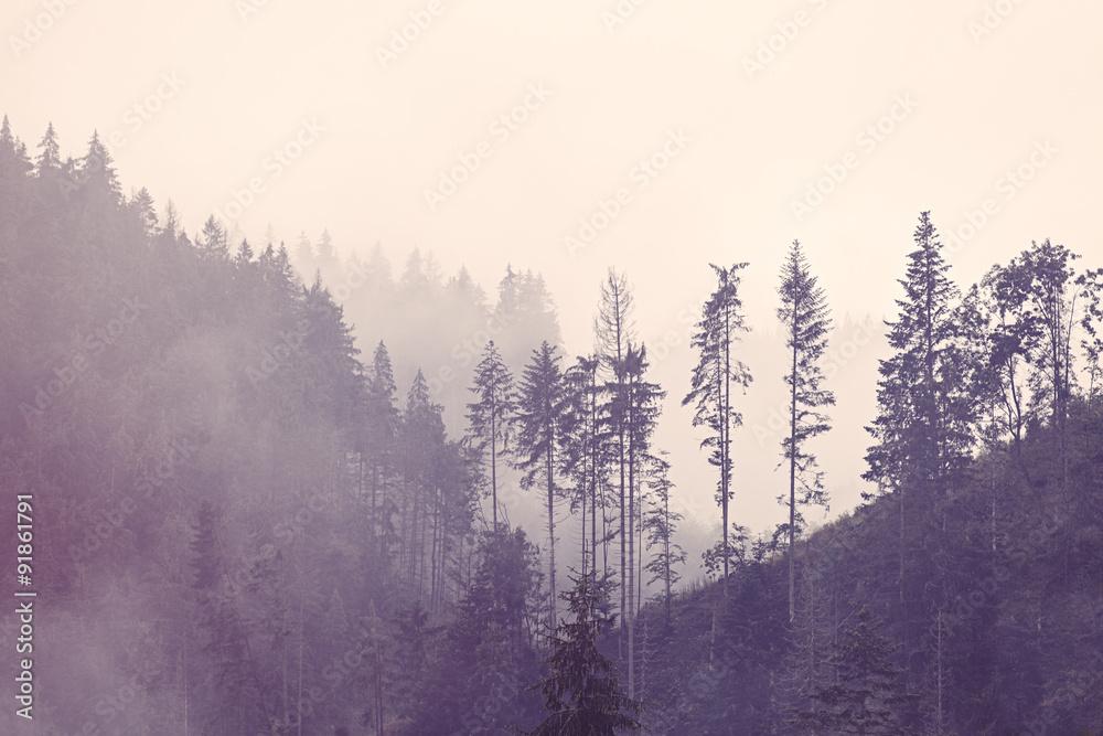 Fototapeta mgła w lesie beże