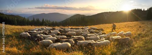 Fotografia Shepherds and sheep Carpathians