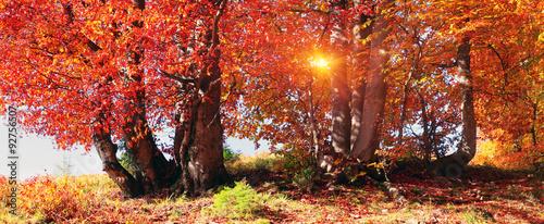 Autumn forest in Ukraine #92756507