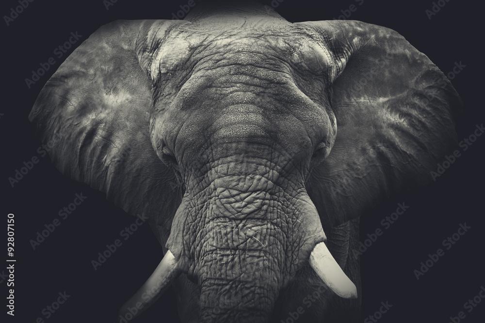 Słoń z bliska. Portret monochromatyczny <span>plik: #92807150   autor: Olga Itina</span>