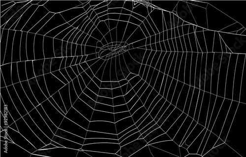 Obraz na plátně silhouette spiderweb
