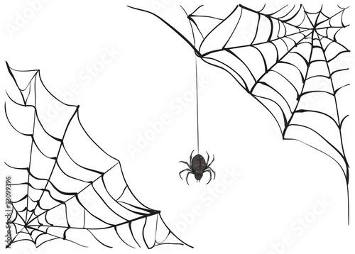 Fototapeta Spiderweb