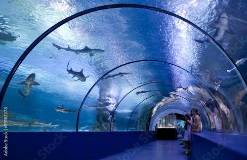 Slika na platnu Children in a water tunnel