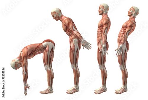 3D medical figure showing trunk flexion, extension and hyerexten Fotobehang