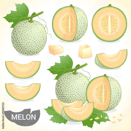 Wallpaper Mural Set of cantaloupe melon fruit in various styles vector format