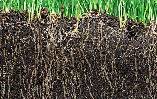 Photo grass with roots and soil