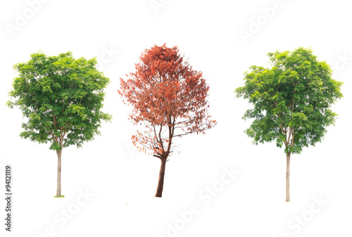 Collection of tree , bush and dead tree isolated on white backgr Poster Mural XXL
