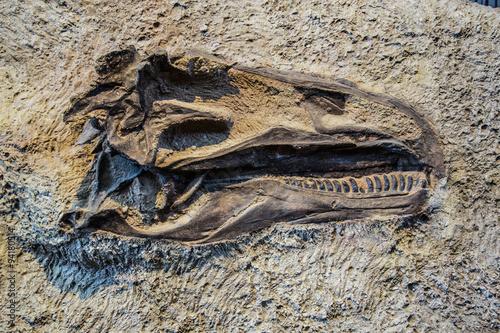 Fototapeta premium głowa skamieniałości dinozaura