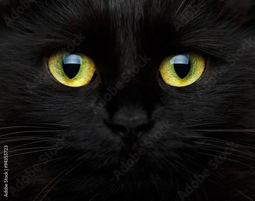 Fotografia Cute muzzle of a black cat
