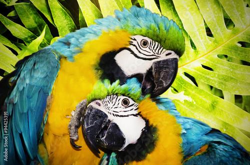 Ara Parrot #94425391