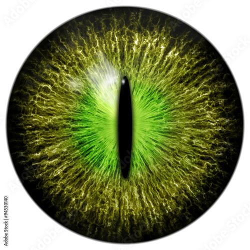 Slika na platnu OLive green cat, crocodile or reptile eye with narrow pupil