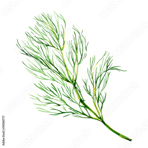 Foto Green dill isolated on white background