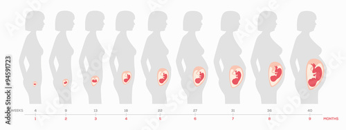 Valokuva The growth of a human fetus in weeks and months in vector format