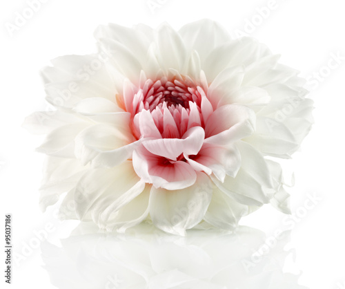 white flower with red center isolated on the white background