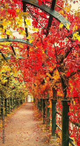 Autumn archway in the garden.