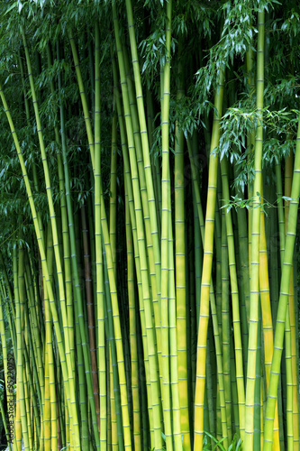Green bamboo nature backgrounds #95220752