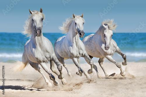 Fototapeta Koně běží podél pobřeží