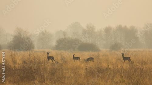 Valokuva Rehe im Oppenweher Moor