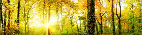 Autumn forest with sun rays #95664358