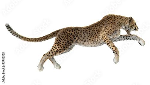 Fotografia Big Cat Cheetah