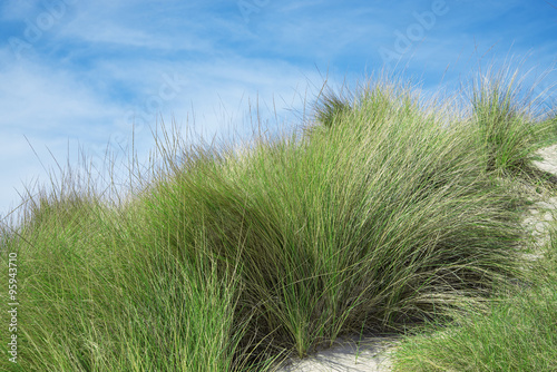 bushes of grass