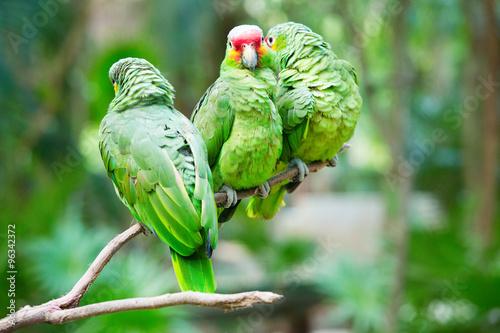 parrot bird #96342372