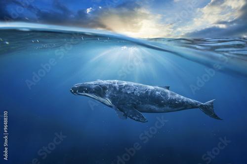 Canvas Print whale in half air