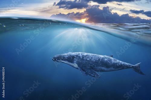 Photo whale in half air