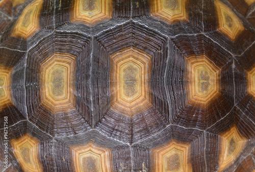 Closeup of a turtle shell. #96757568