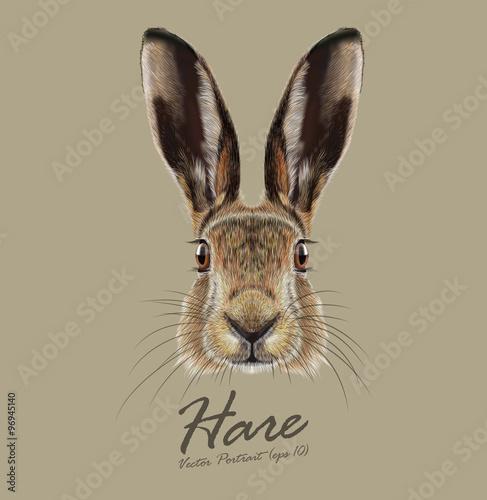Hare or Rabbit wild animal cute face Fototapet