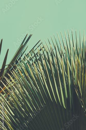 Abstrac tropikalny tło. Retro stonowana.