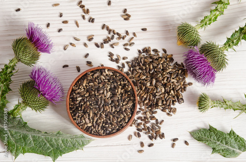Seeds of a milk thistle with flower (Silybum marianum, Scotch Th