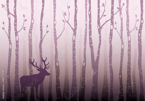 Birch tree forest, vector