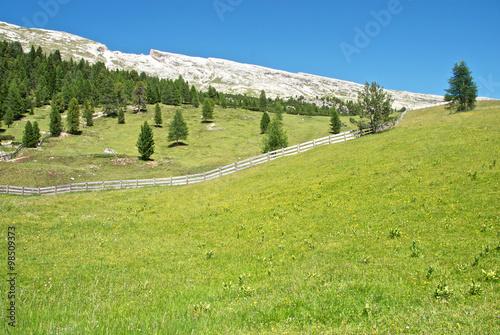 The Alps #98509373