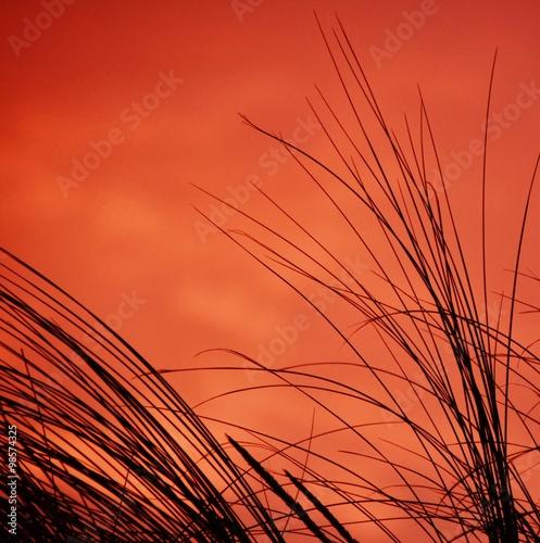 Dune grass #98574325