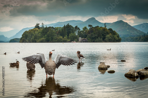 Canvastavla Goose and ducks on Derwent Water in the English Lake District