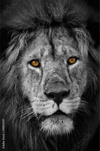 Löwenblick