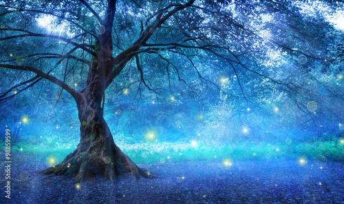 Fotografia Fairy Tree In Mystic Forest