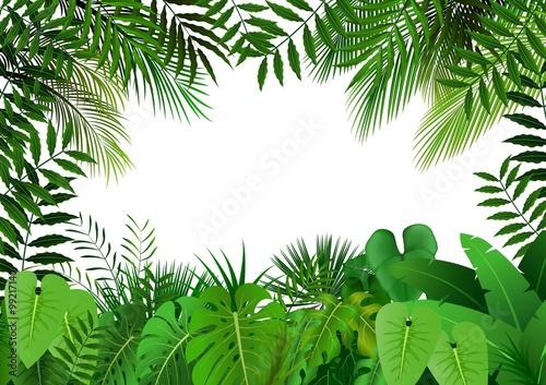 Canvas Print Jungle on white background