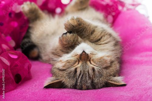 Fototapeta Schlafendes kätzchen